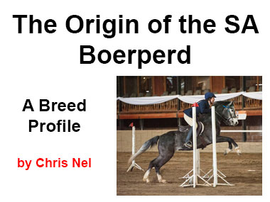 The Origin of the SA Boerperd