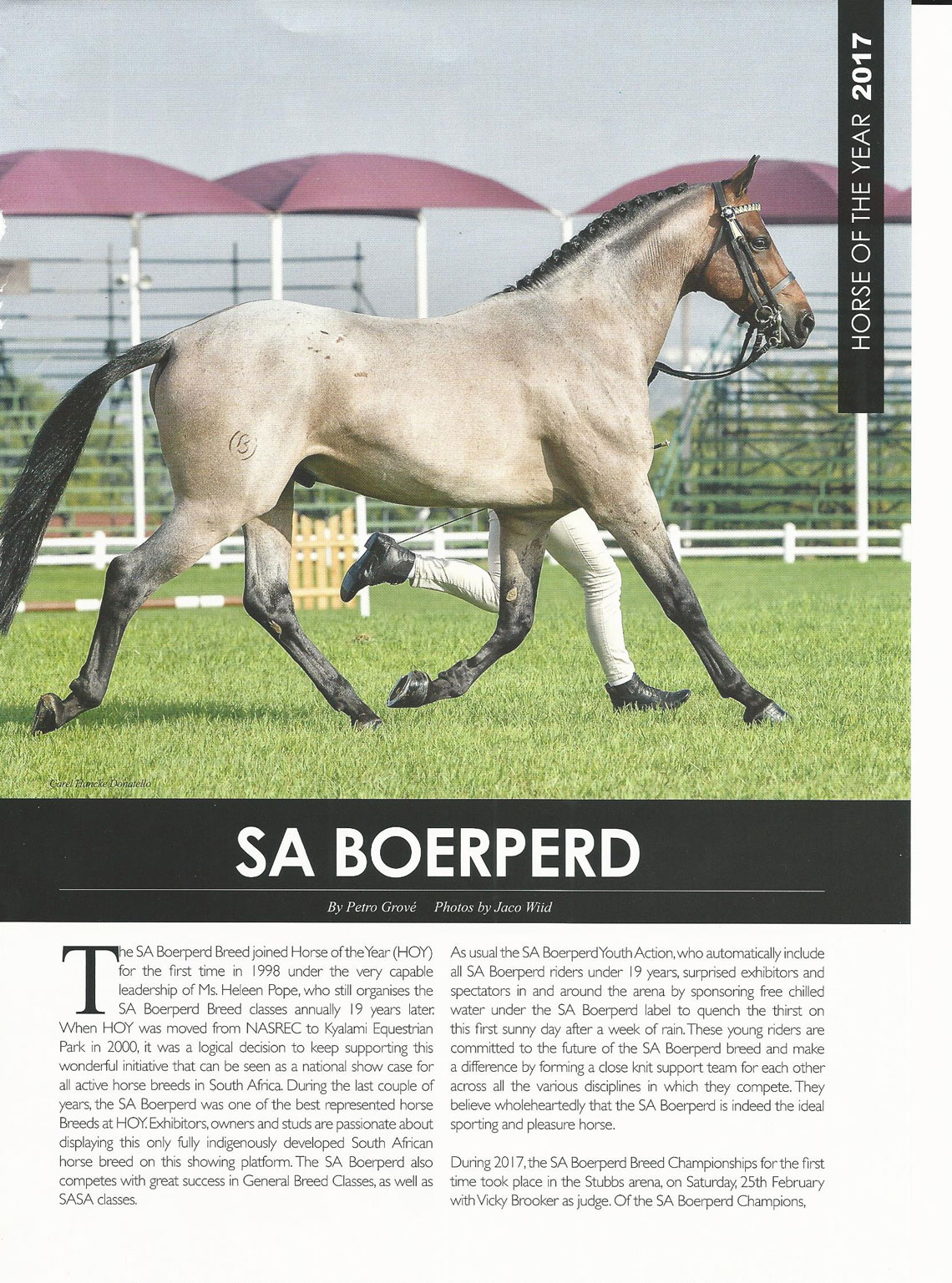 SA Boerperd Horse of the Year 2017